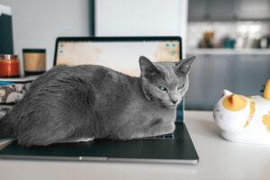 Dobrej jakości komputeryLenovo ThinkPad E14 Gen 3mogą być użytkowane między innymi przez biznesmenów, handlowców