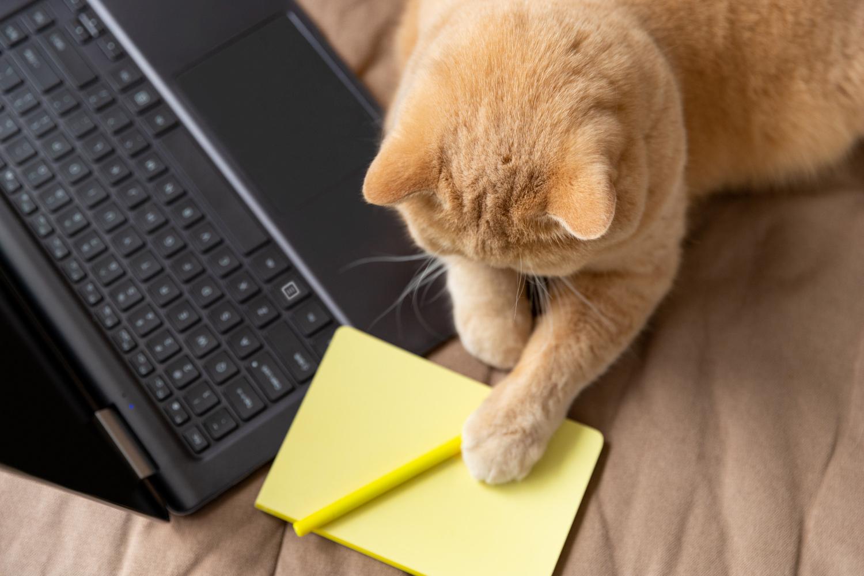 Lenovo ThinkPad L14 Gen 2są stosowane chętnie między innymi do pracy biurowej